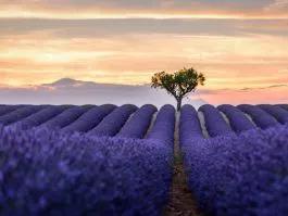 Grasse Fragrance