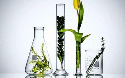 Synthetic Fragrance VS Natural Fragrance